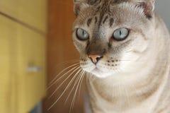 Сторона кота Стоковое Изображение RF