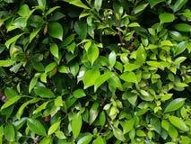 Сторона малого дерева Стоковые Изображения RF