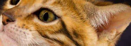 Сторона милого котенка и уха, как предпосылка, конец-вверх Стоковые Изображения