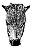 Сторона молодого быка Стоковые Фотографии RF