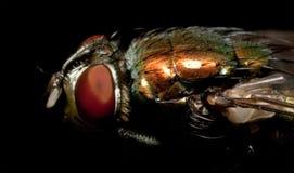 сторона мухы Стоковое Изображение