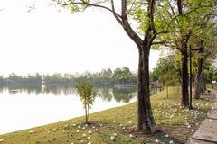 Сторона озера в рано утром Стоковая Фотография RF