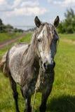 Сторона лошади. Стоковые Фото