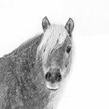 Сторона лошади Стоковые Фотографии RF