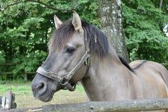 Сторона лошади Стоковая Фотография RF