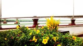 Сторона реки ландшафта Стоковое Фото