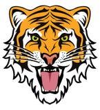 Сторона сердитого тигра Стоковые Изображения