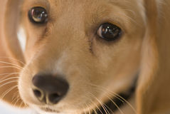 сторона собаки крупного плана Стоковые Фотографии RF