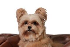 Сторона собаки крупного плана Стоковые Изображения RF