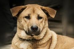 Сторона собаки Портрет любимчика Животное Animalia Животный любовник Любовник собаки собач canis стоковое изображение rf