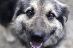 Сторона собаки Стоковая Фотография RF