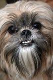 сторона собаки стоковые фотографии rf