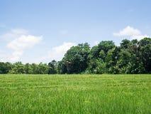 Сторона страны, трава Стоковая Фотография RF