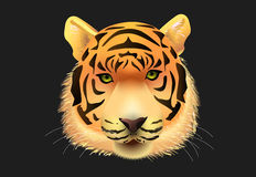 Сторона тигра Стоковая Фотография