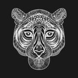 Сторона тигра Zentangle стилизованная белая Вектор нарисованный рукой doodle il Стоковая Фотография RF