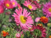 Сторона цветка к восходу солнца Стоковое Фото