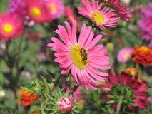 Сторона цветка к восходу солнца Стоковые Изображения RF
