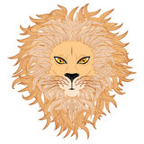 Сторона льва Стоковое фото RF