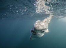 Сторона Mola Стоковое Фото