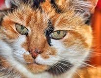 сторона s кота Стоковые Фото