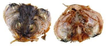 2 стороны сплющенной головы жаркого морского волка удят Стоковое Изображение