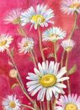 Стоцветы акварели на красной предпосылке Костюм для плаката, wallpa Стоковое Фото