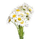 стоцветы букета стоковая фотография