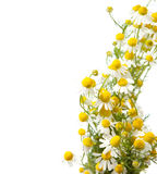 стоцветы граници стоковое фото
