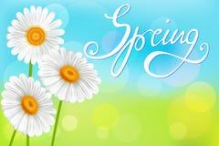 Стоцветы на абстрактной предпосылке весны Стоковые Фотографии RF