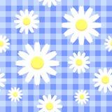Стоцветы на голубой checkered предпосылке Стоковые Изображения RF