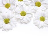 стоцветы предпосылки стоковые изображения rf