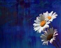 стоцветы стоковые изображения rf