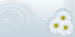 стоцветы Стоковые Фото