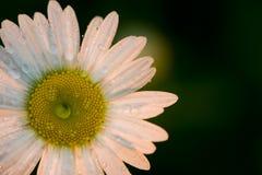 стоцветы стоковая фотография rf