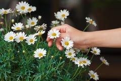 стоцветы Стоковое Фото