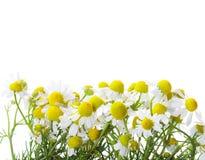стоцветы стоковые изображения