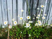 стоцветы Стоковая Фотография