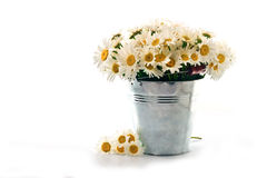 Стоцвет в ведре на белой предпосылке стоковое фото rf