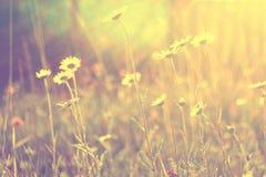 Стоцвет в заходе солнца стоковое фото