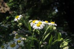 Стоцвет в поле Стоковое фото RF