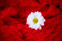 Стоцвет на красной предпосылке Стоковое Фото