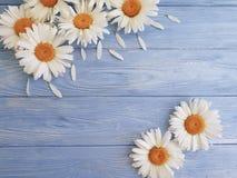 Стоцвет на цветени приветствию голубой деревянной текстуры приглашения предпосылки праздничном стоковое изображение rf