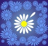 стоцвет предпосылки Стоковая Фотография