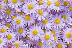 стоцвет предпосылки Стоковые Изображения RF