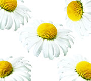 стоцвет предпосылки стоковое фото rf