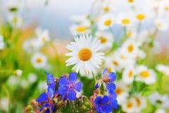 Стоцвет среди цветков Стоковое Изображение