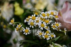 стоцвет цветет белизна Стоковое Изображение RF