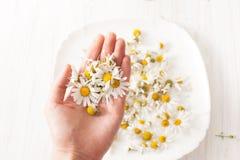 Стоцвет цветет в руке на белой плите с цветками Стоковые Изображения RF