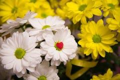 Стоцвет цветет обои стоковое изображение rf