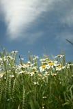 стоцвет Стоковые Изображения RF